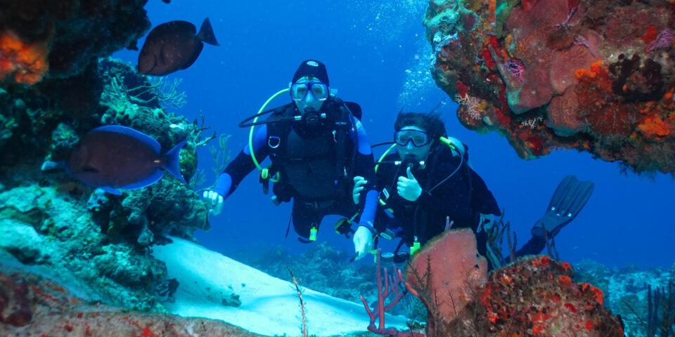 Imagen de buzos, arrecifes cozumel, fondo marino, fauna marina, mar caribe