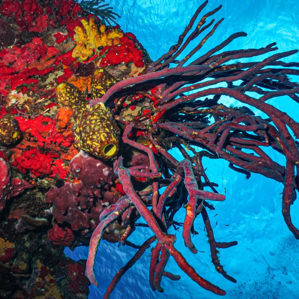 HEADER arrecifes luis6