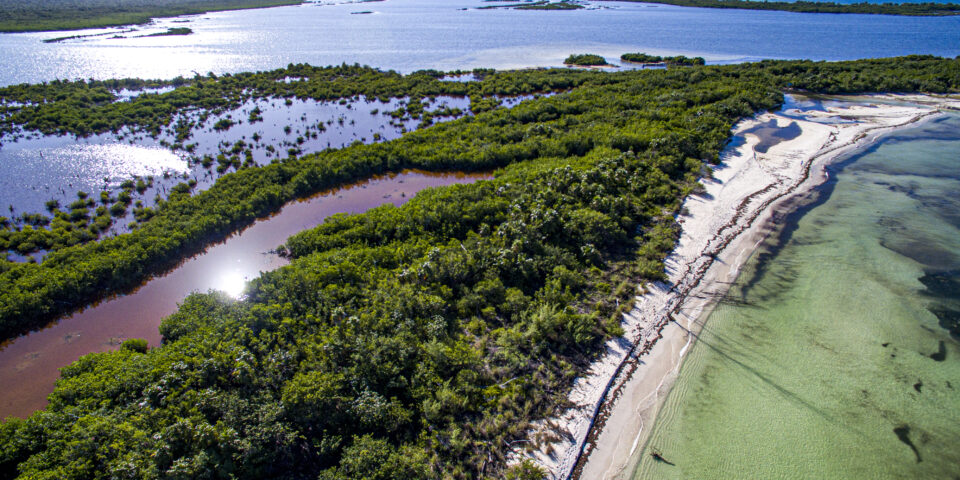 Laguna colombia cozumel, mar caribe de fondo, manglar cozumel, flora cozumel