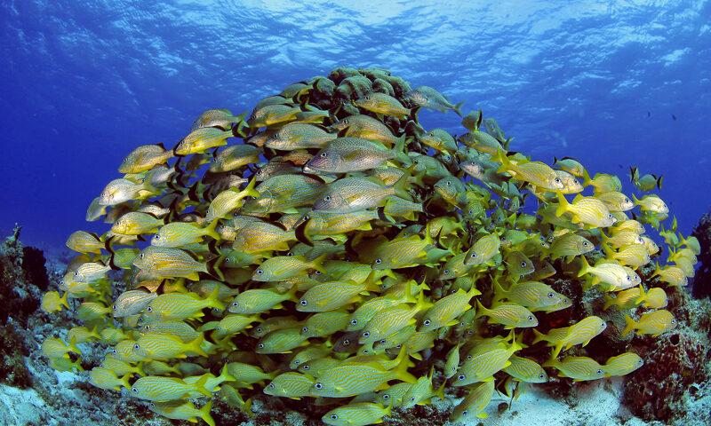 Imágenes de Arrecife Celarain, arrecife cozumel, arena, mar caribe mexicano