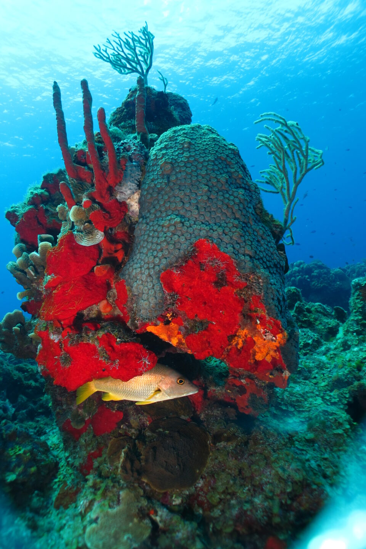 Arrecifes cozumel, corales, colores, arrecife San Francisco, caribe mexicano