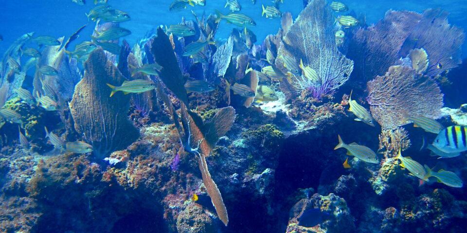 Imagen del arrecife Colombia Cozumel, fauna marina en el caribe mexicano