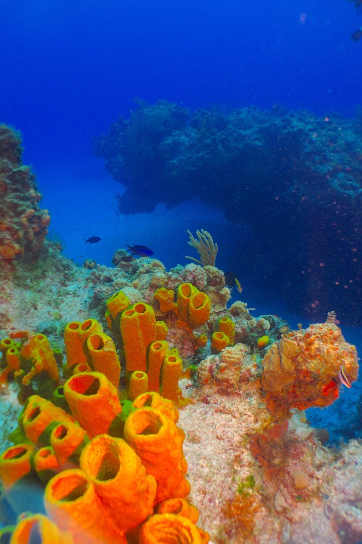 Arrecifes las palmas Cozumel, corales, fauna marina Cozumel