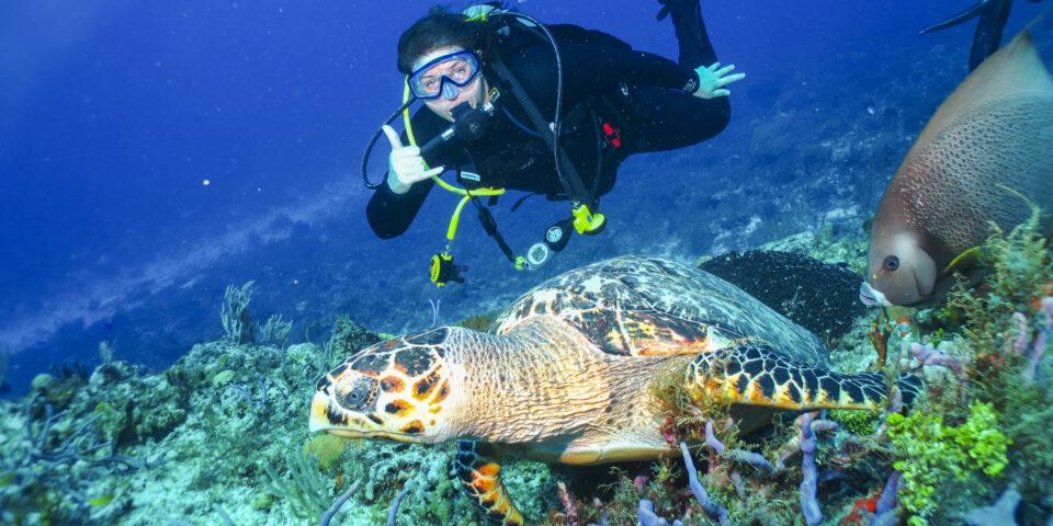 Buzo, fauna marina cozumel, buceo cozumel, tortuga marina, pez angel, fondo marino cozumel