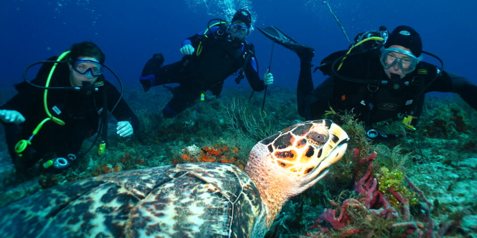 Imagen arrecifes de cozumel, buzos cozumel, fauna marina, fondo marino cozumel