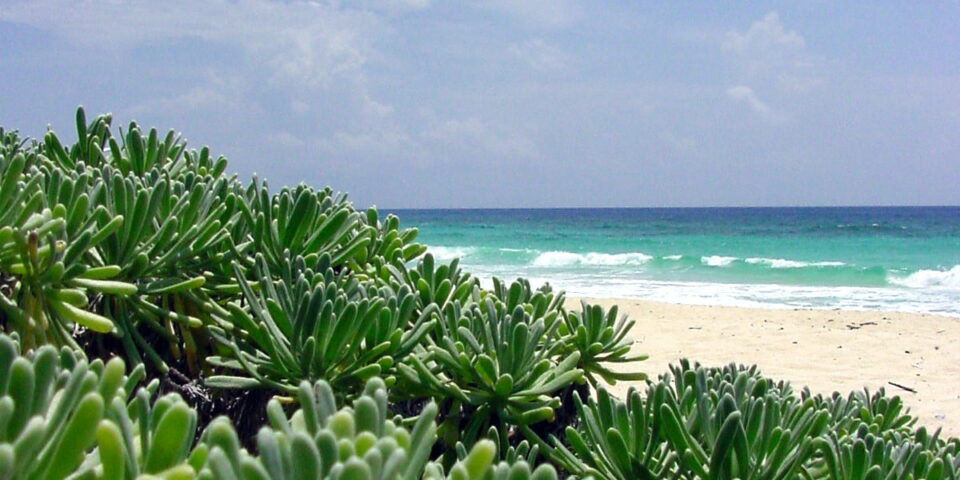 imagen vegetación cozumel, playa cozumel, arena, mar turquesa